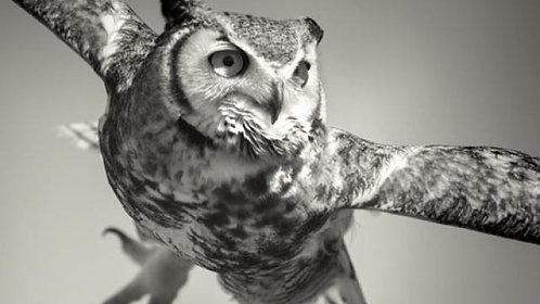 Flight School: Photographing Birds in Flight