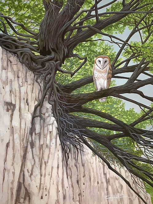 Barn Owl by Richard Sloan