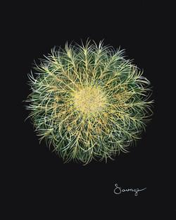 CS15 Golden Barrel Cactus 2