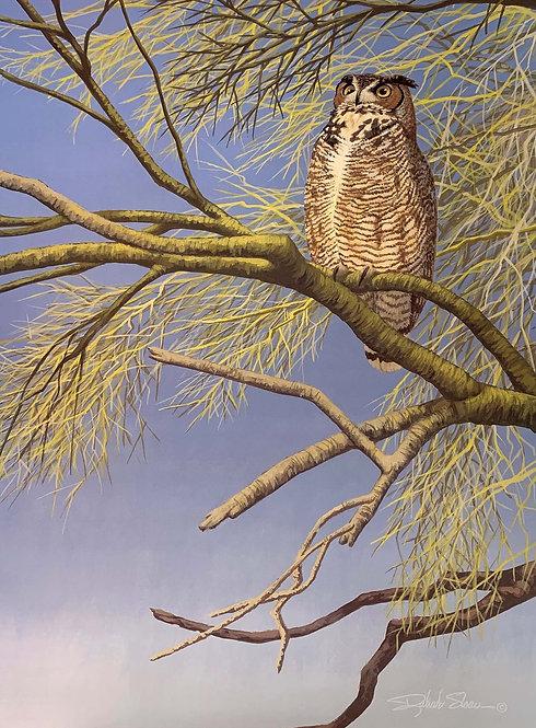 Great Horned Owl by Richard Sloan