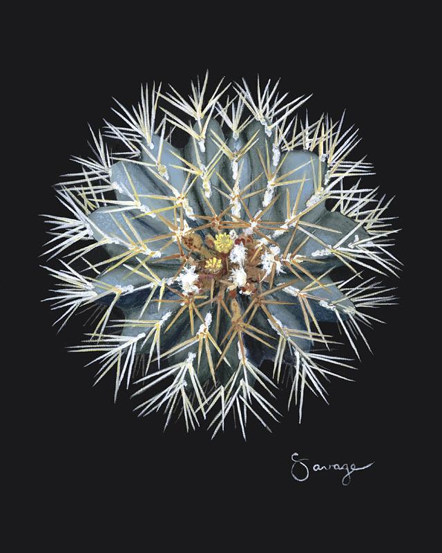 CS17 Blue Barrel Cactus