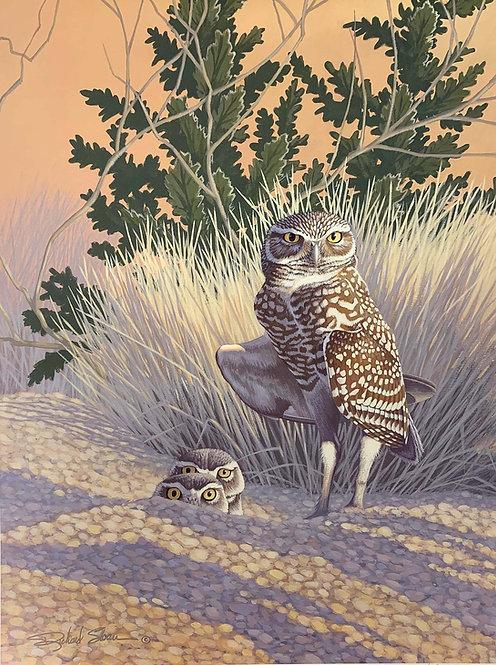 Burrowing Owl by Richard Sloan