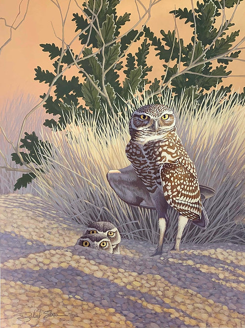 Burrowing Owl by Richard Sloan