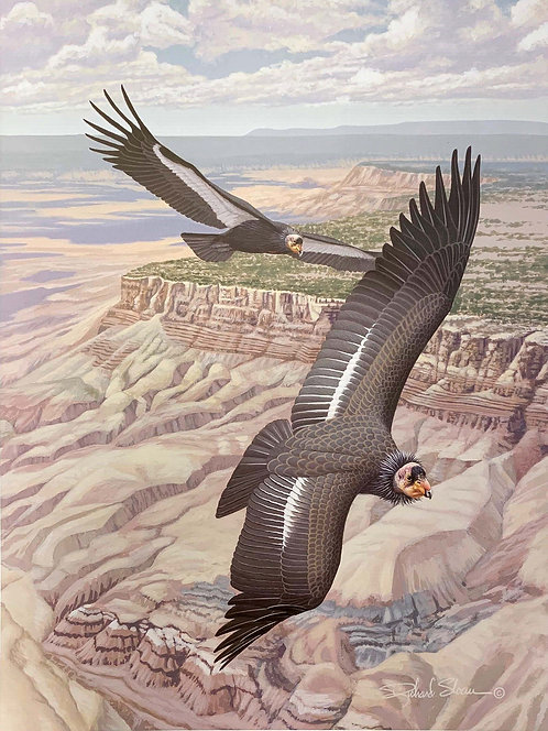 California Condor by Richard Sloan