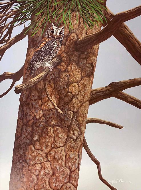 Flammulated Owl by Richard Sloan
