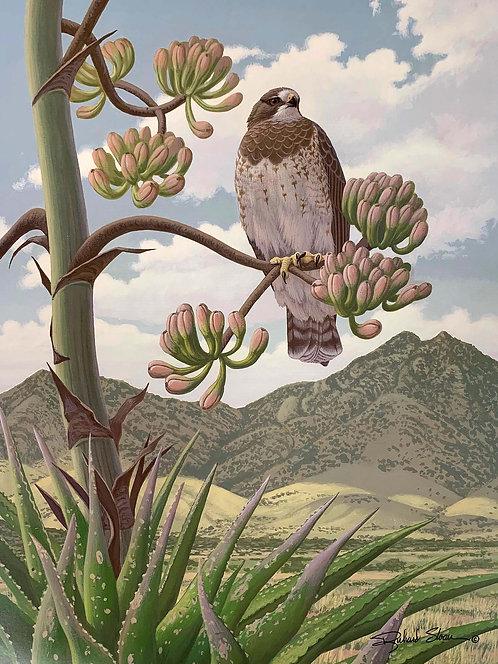 Swainson's Hawk by Richard Sloan