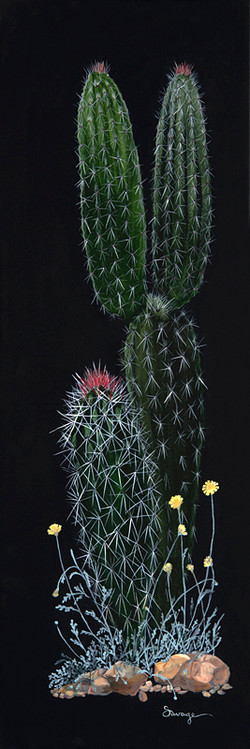 CS20 Dwarf Organpipe cactus