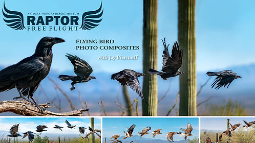 Raptor Free Flight: Flying Bird Photo Composites (Oct. 10)