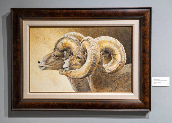 Dawn Watch: Desert Bighorn Sheep