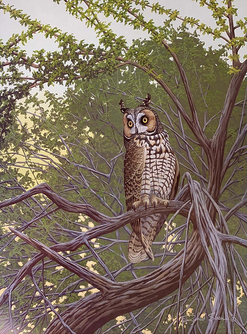Long-eared Owl by Richard Sloan