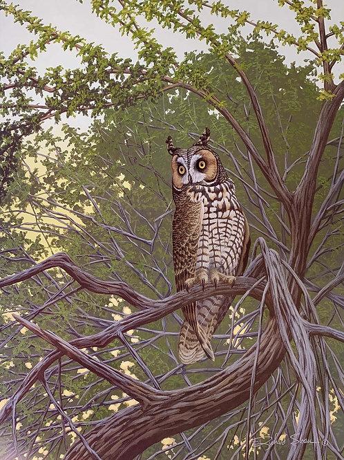 Long-eared Owl by Richard Sloan