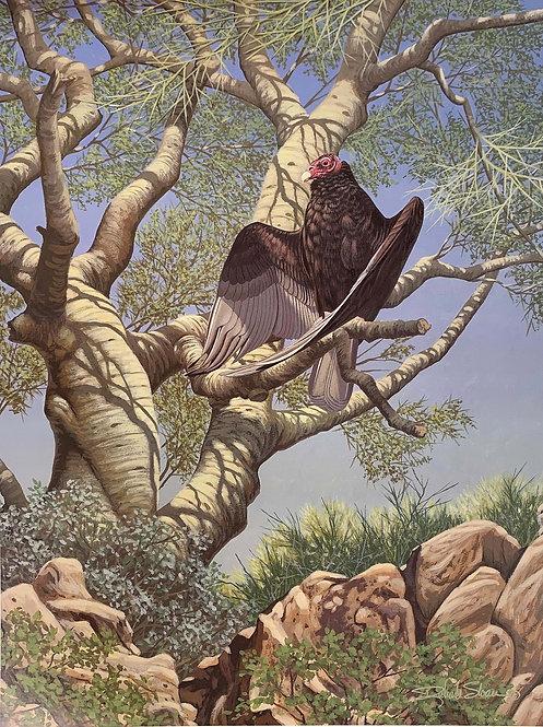 Turkey Vulture by Richard Sloan