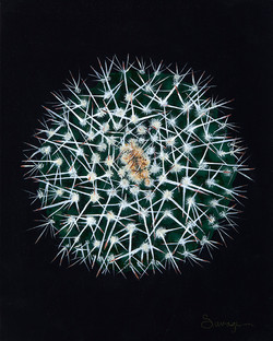 CS1 Silver Arrow Cactus
