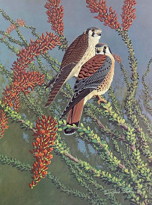 American Kestrel by Richard Sloan