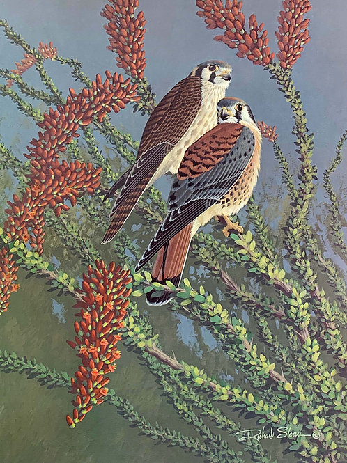 American Kestrel by Richard Sloan