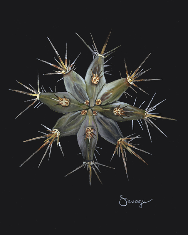 CS8 Candelabra cactus