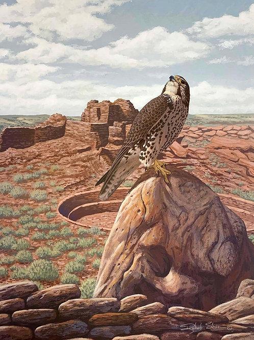 Prairie Falcon by Richard Sloan