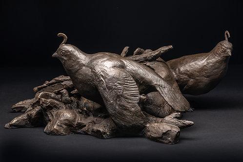 Nesting Gambel's Quail by Mark Rossi