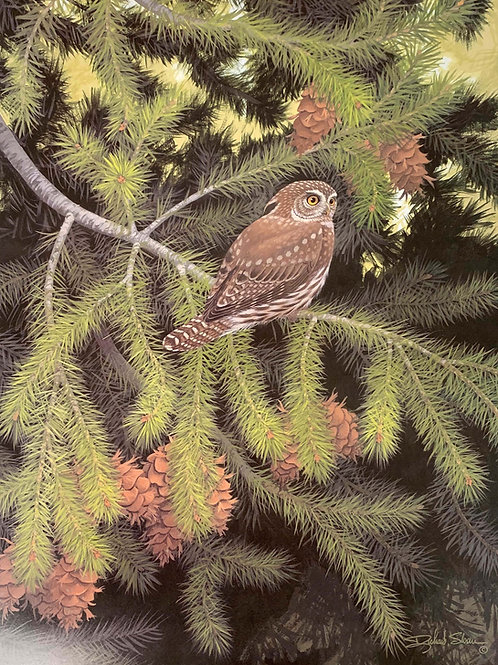 Northern Pygmy Owl by Richard Sloan