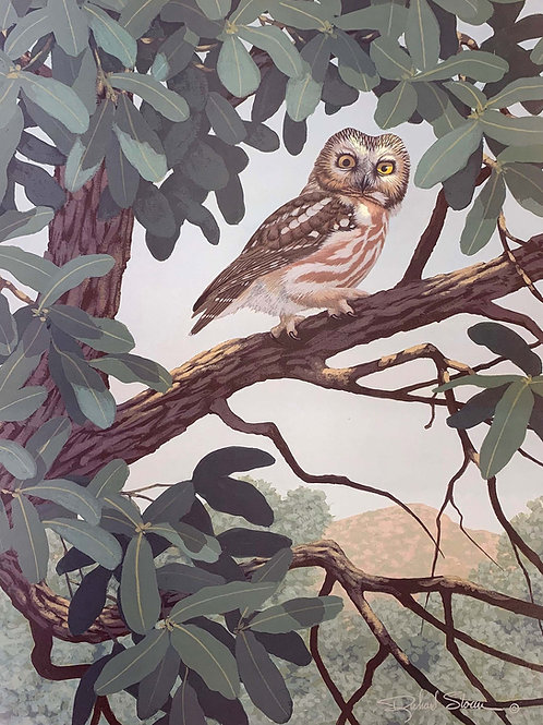 Northern Saw-whet Owl by Richard Sloan