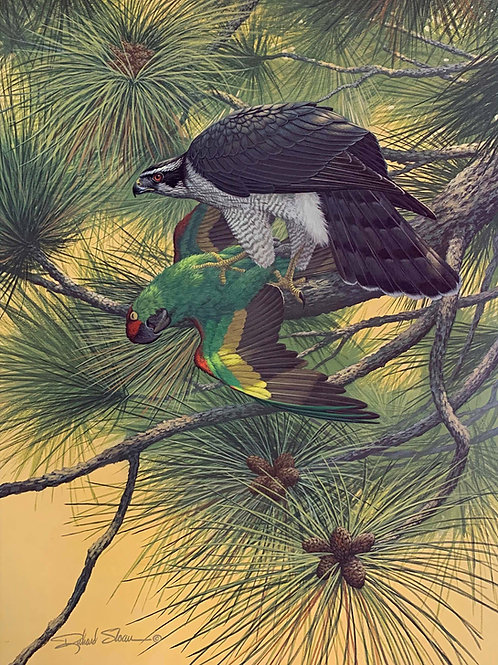 Northern Goshawk by Richard Sloan