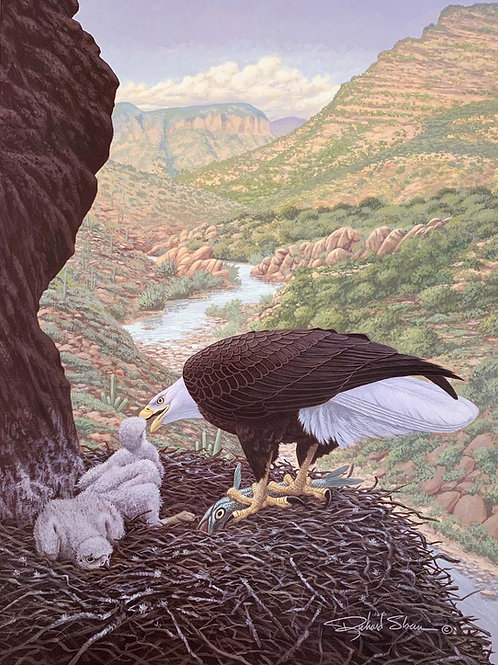 Bald Eagle by Richard Sloan