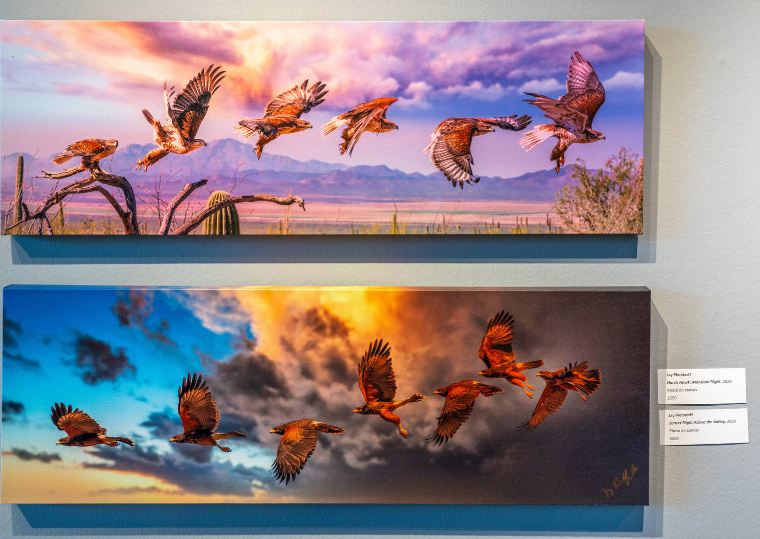 Harris Hawk Monsoon Flight (top) Sunset Flight Over the Valley (bottom)
