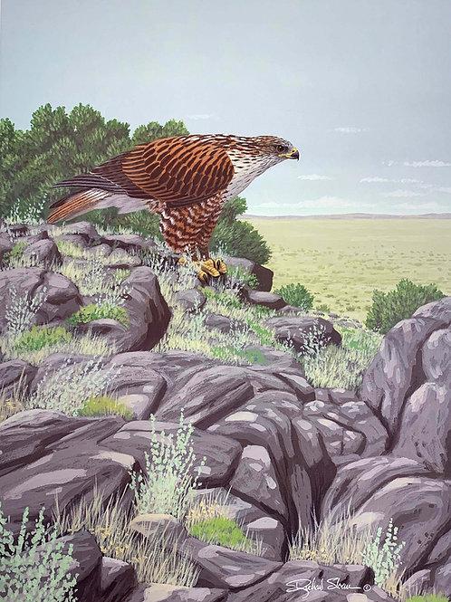 Ferruginous Hawk by Richard Sloan