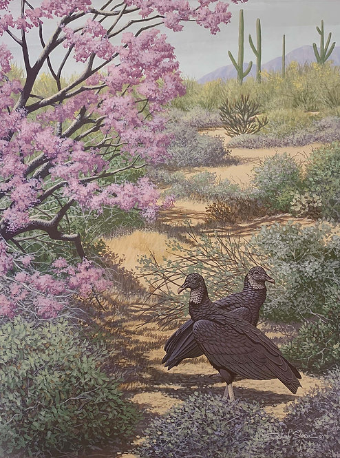 Black Vulture by Richard Sloan