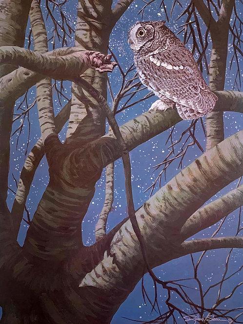 Western Screech Owl by Richard Sloan