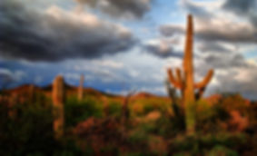 Red Saguaro Sunset.jpg