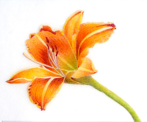 Gildow, CP On Mylar, Daylily on Mylar.jp