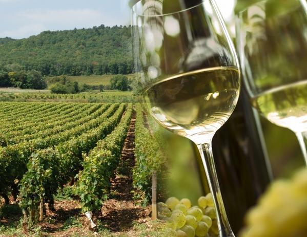 20 апреля ужин с винами региона Шабли