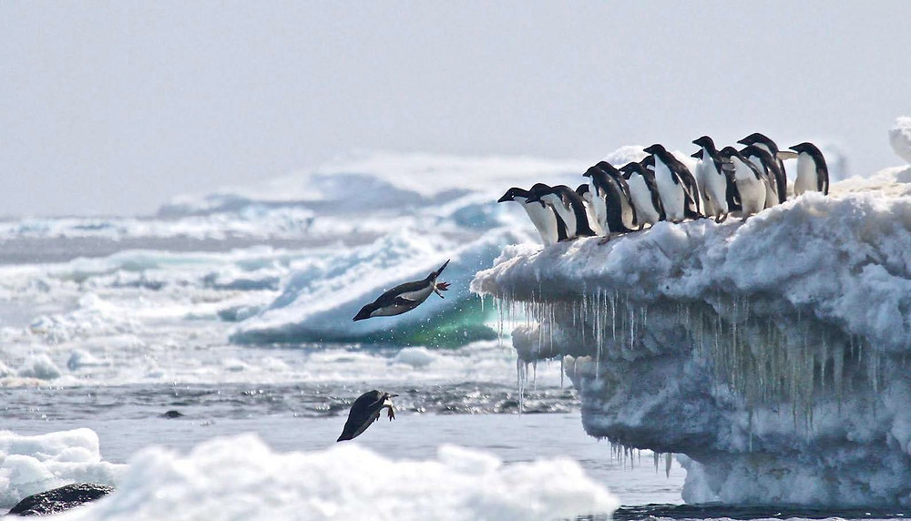 Penguin Island Antarctica