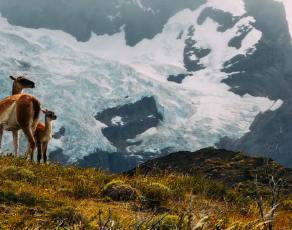 A Patagonia Odyssey