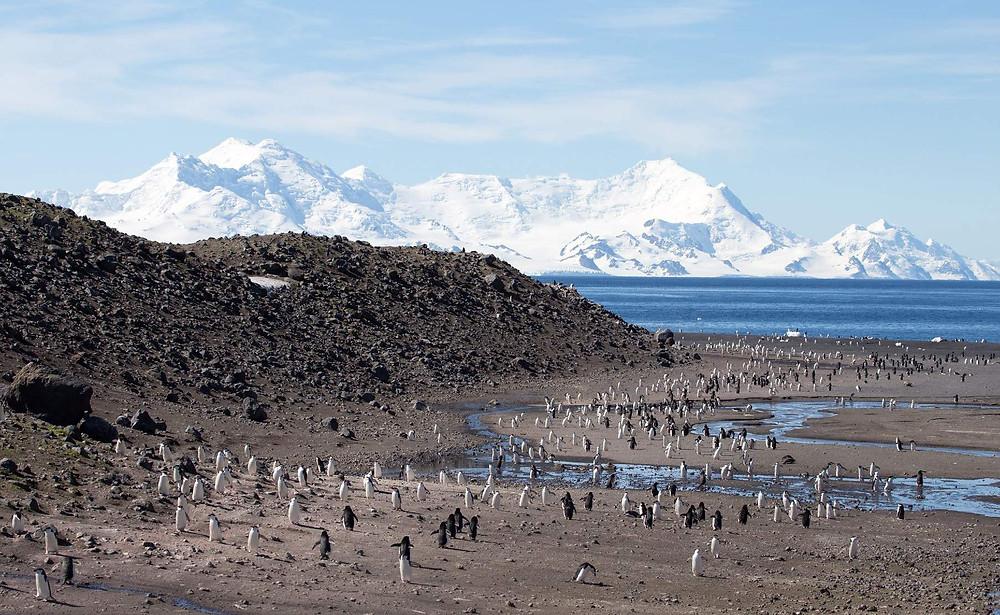 Pendulum cove Antarctica