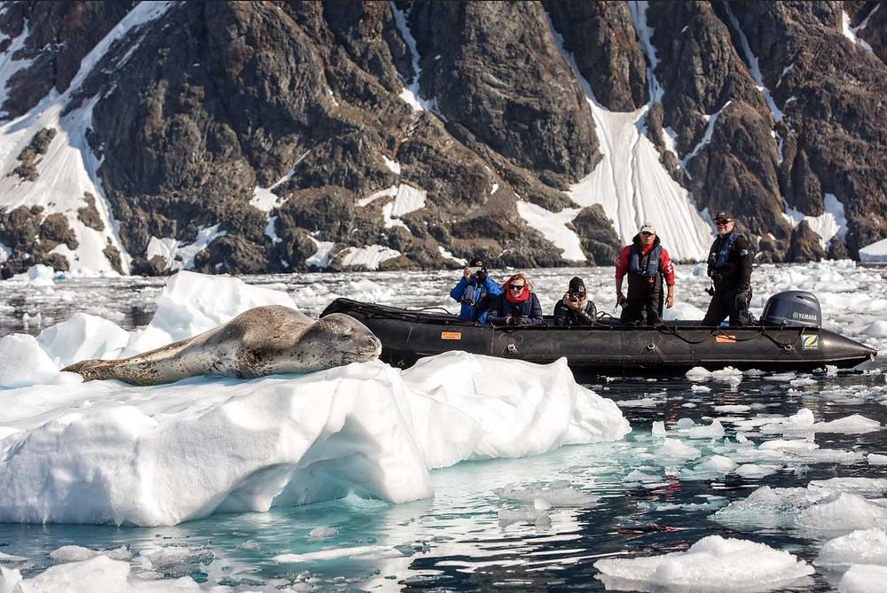 Hannah Point Antarctica
