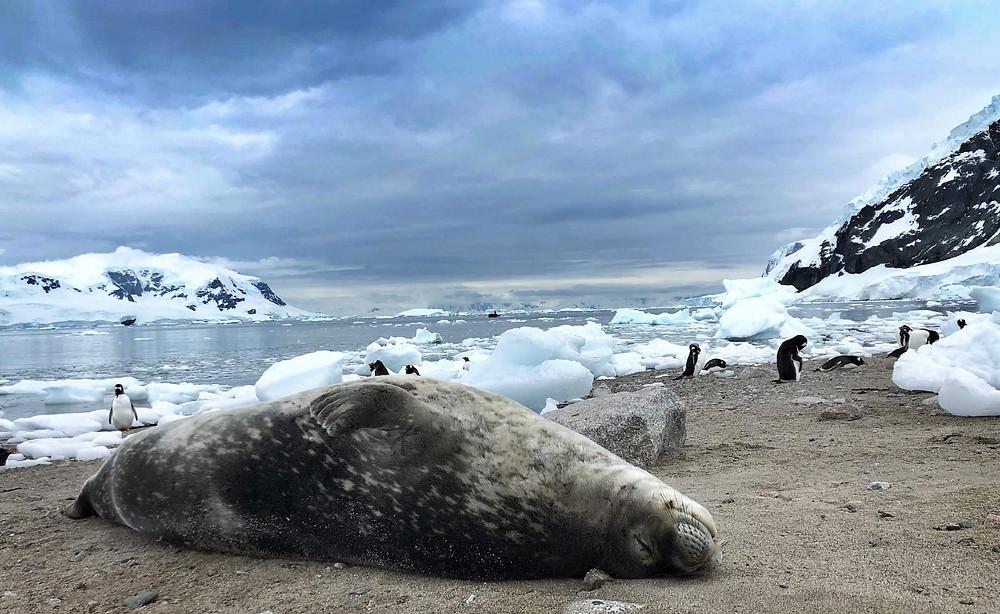 Maxwell Bay Antarctica