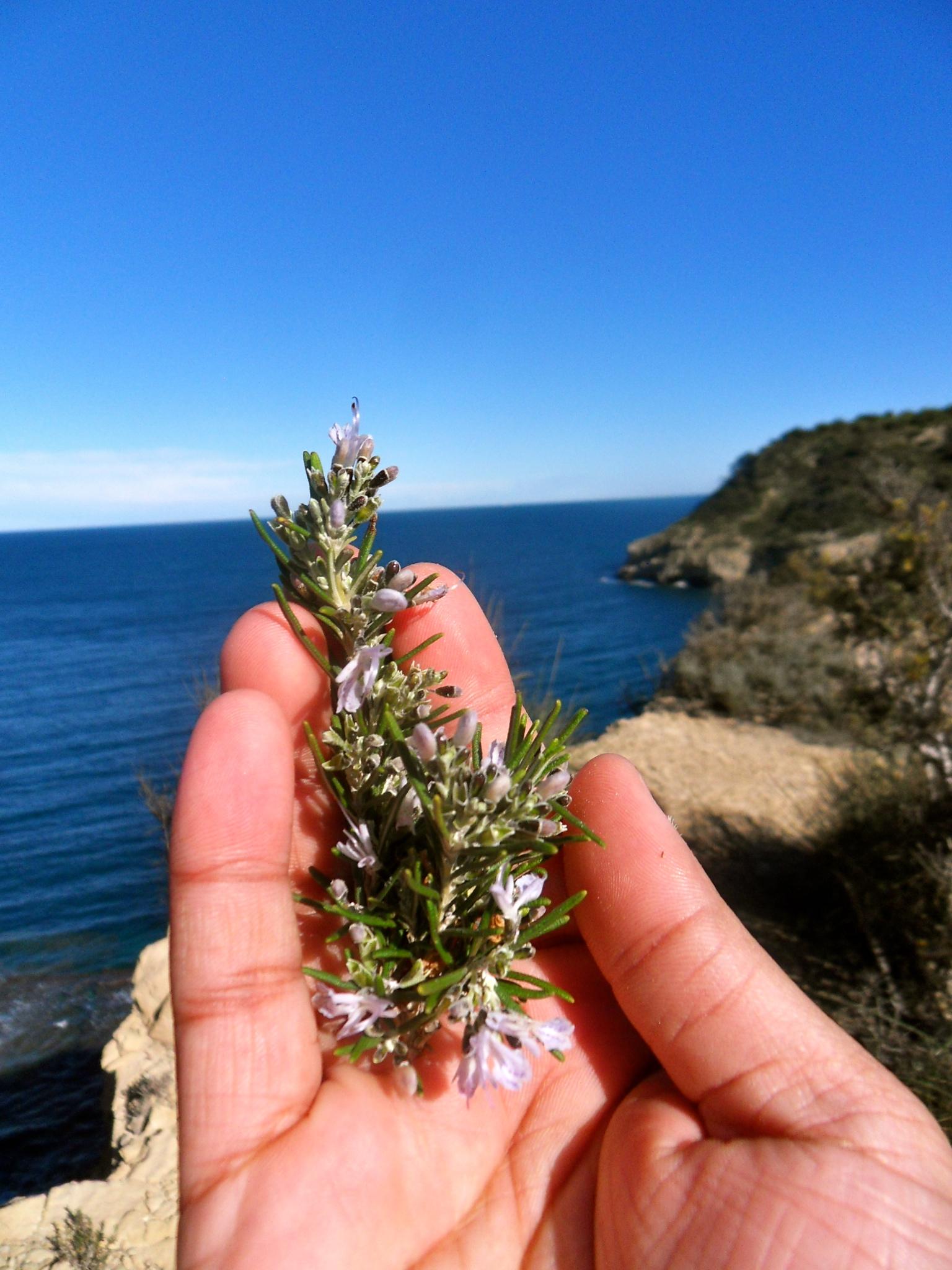 Herbs on my Hike