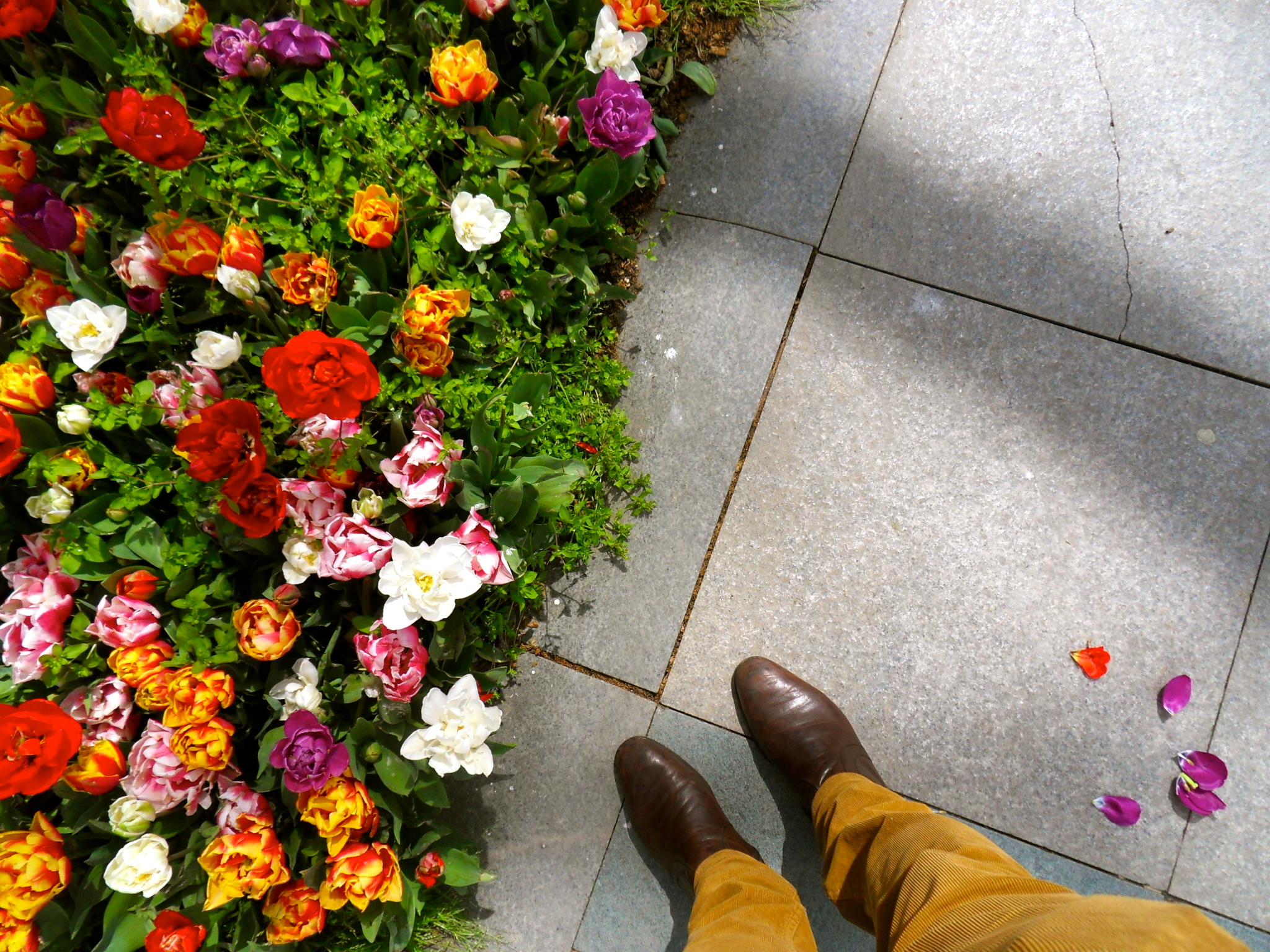 Boots: Meets the Blooms