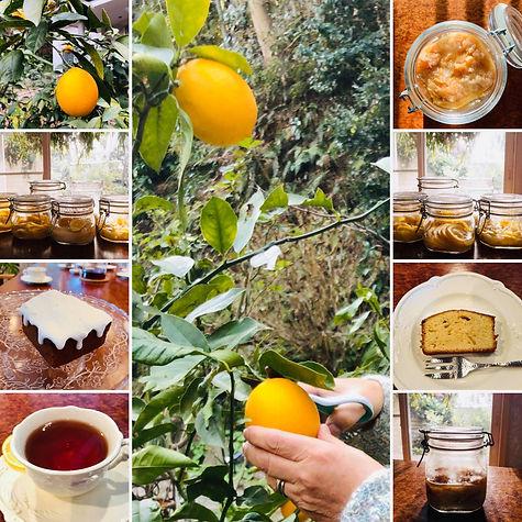 レモンの会|レインボーステイ