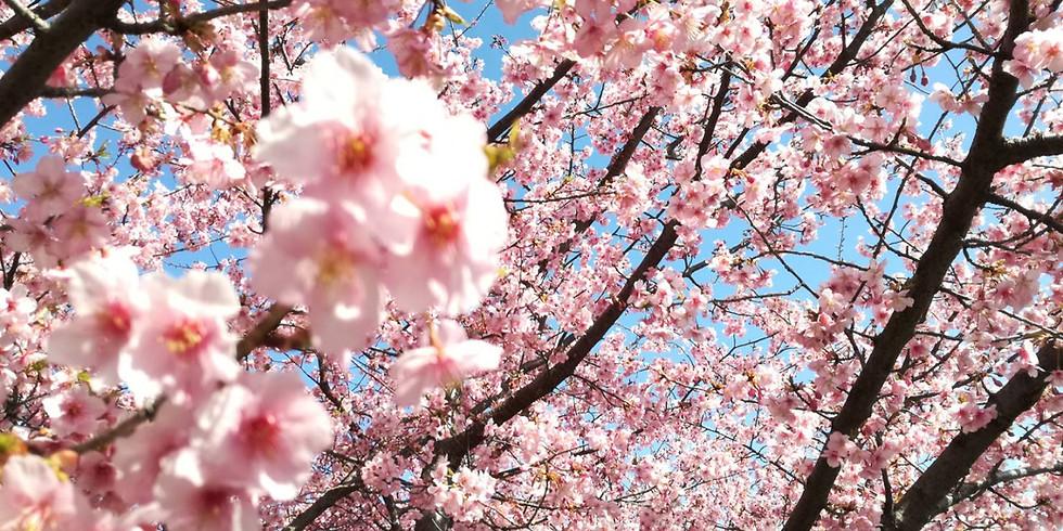 カプセル蒸留 桜スペシャル