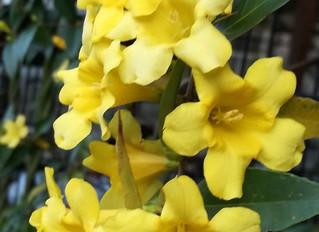 毒のある花