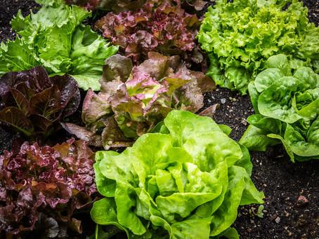 Bahçe kuleniz için evde ''Kompost'' yapımı.