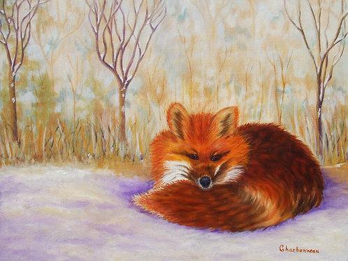 Renard Roux /Red Fox
