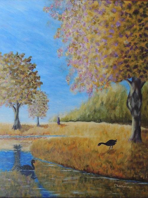 Nature d'automne / Autumn nature