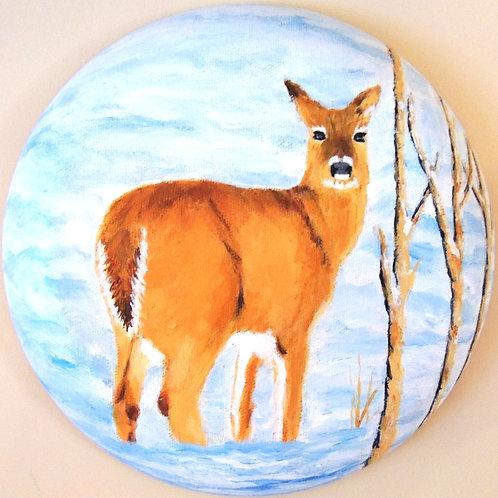 Cerf du Canada / deer of Canada