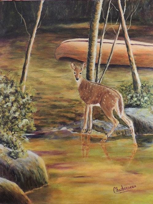Splendeur Nature / Splendor of nature
