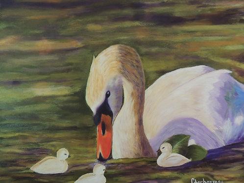Le Calme du Cygne / Calm of swan (reconnaissance)
