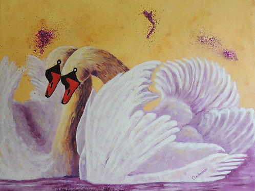 Cygnes D'Amour / Swans of Love